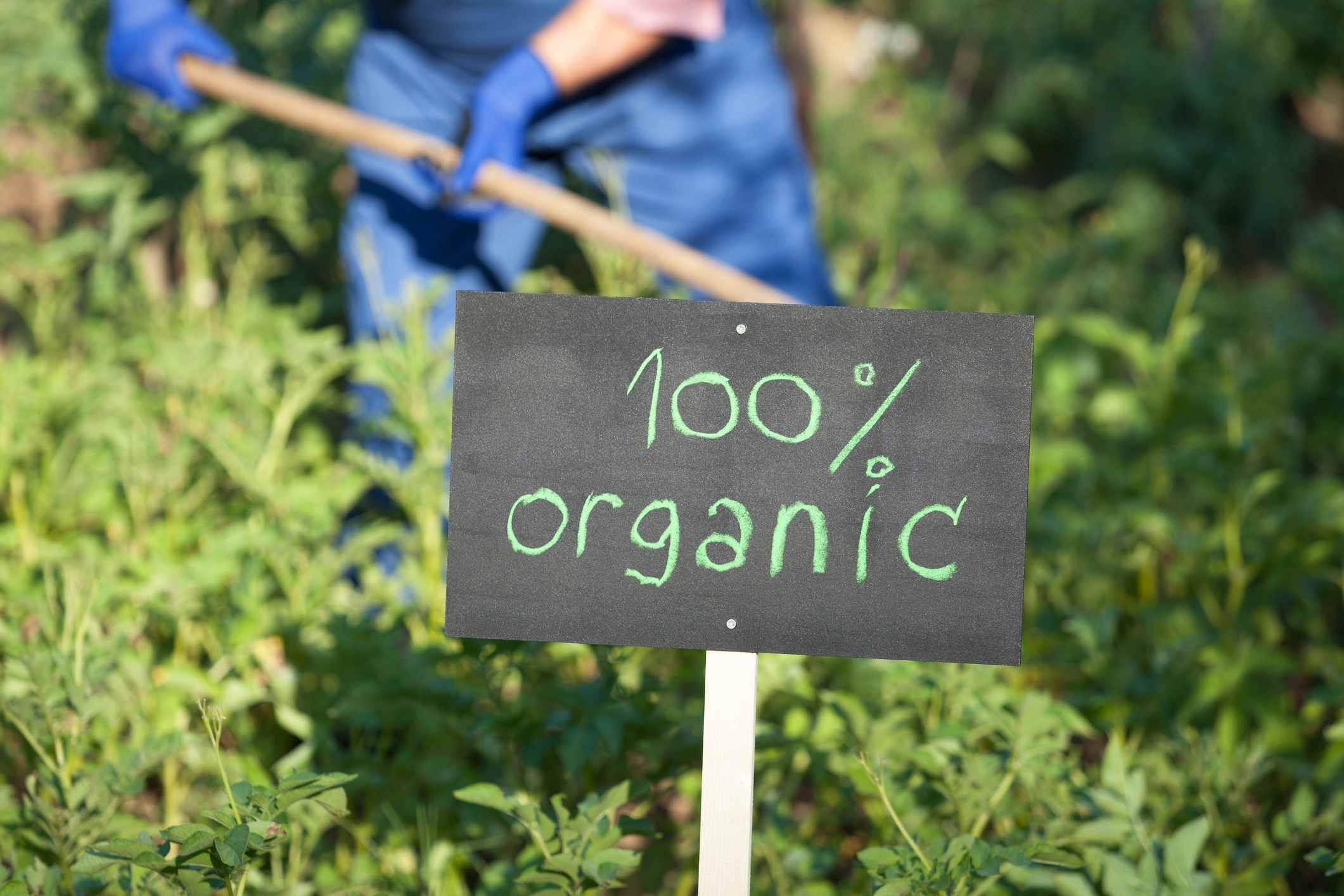Non-GMO or Organic? What Your Shoppers Need to Know (and How to Educate Them)